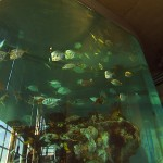 Aquarium Interior Charleston, SC