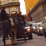 Carriage Ride Tour Charleston, SC