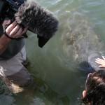 DP Dan Beckmann, taping the Florida Manatee up close and personal